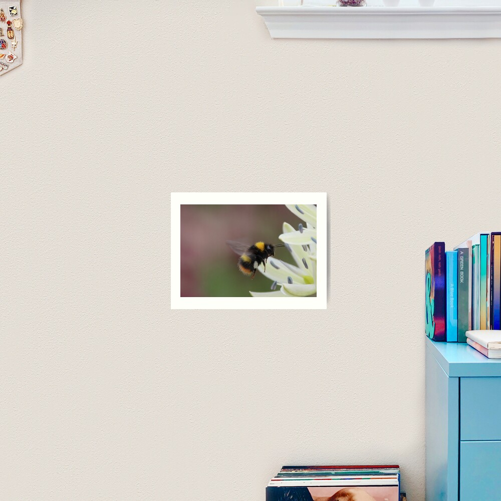Bee in flight Art Print
