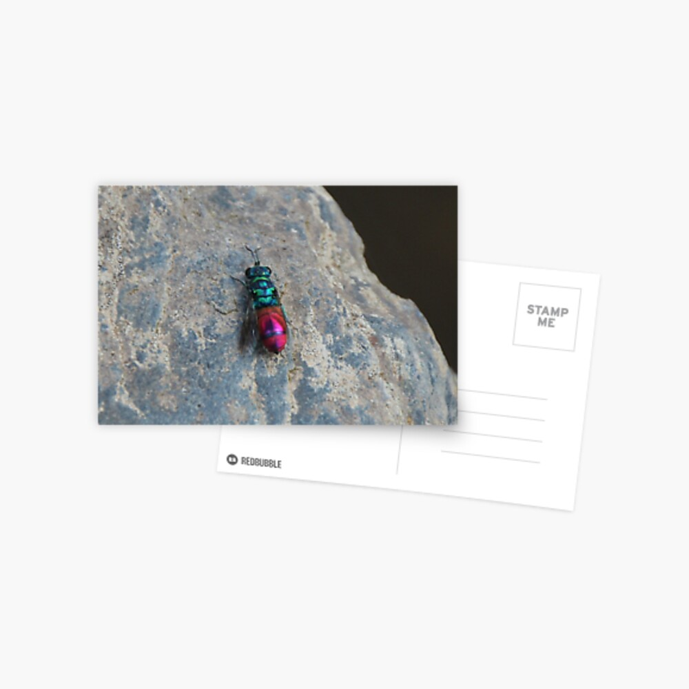 Ruby tailed wasp Postcard