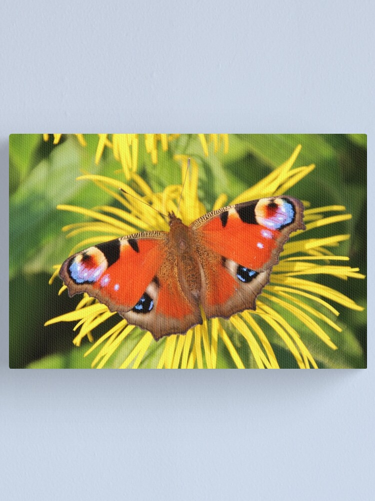 Alternate view of Peacock butterfly Canvas Print