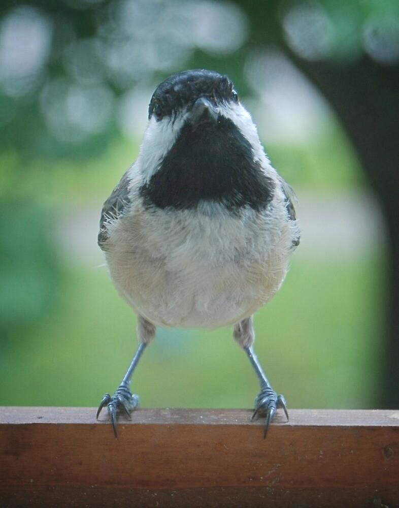 Carolina Chickadee by G. David Chafin