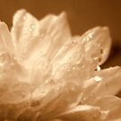 Flower and droplets. by Livvy Young