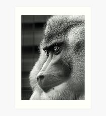 Drill - Edinburgh Zoo Art Print