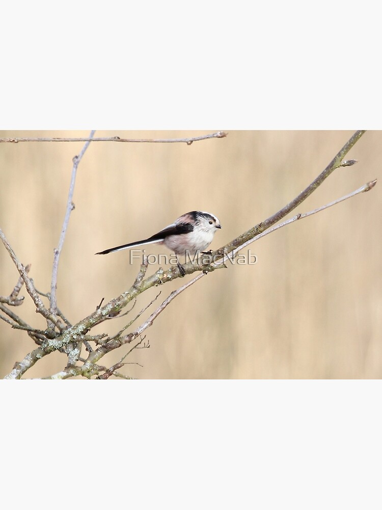 Long tailed tit by orcadia