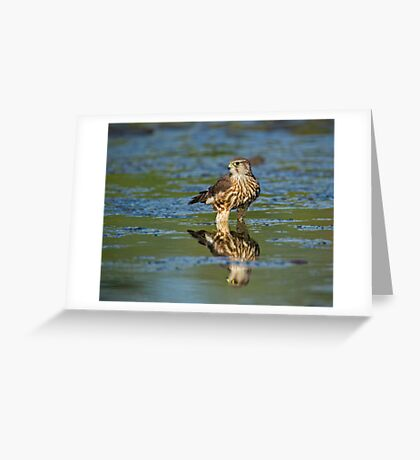 Merlin Reflection  Greeting Card