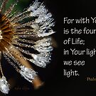 See Light in Your Light ~ Psalm 36:9 by Robin Clifton