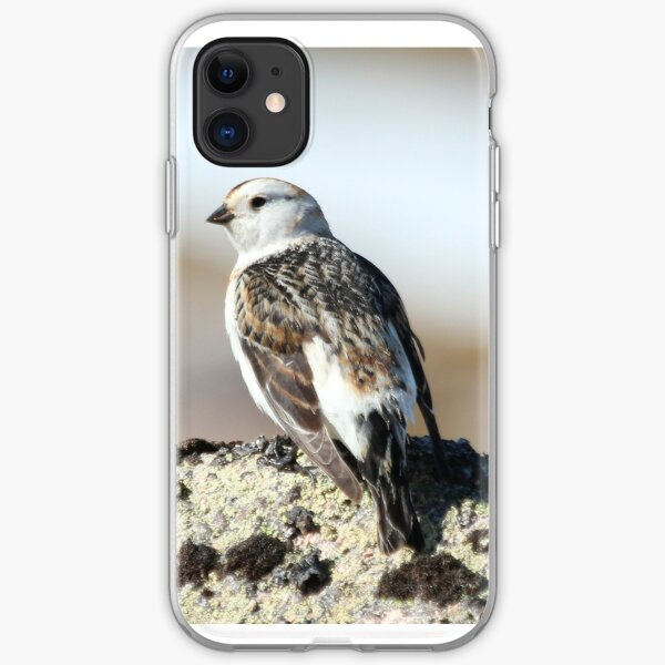 Snow bunting iPhone Soft Case