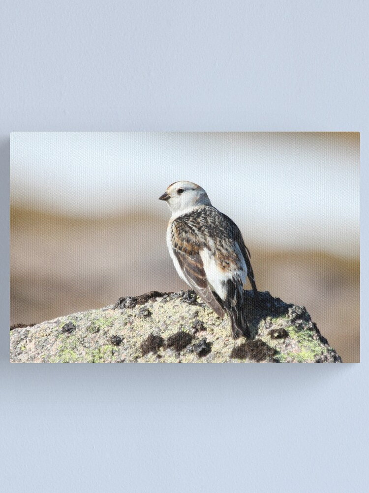 Alternate view of Snow bunting Canvas Print