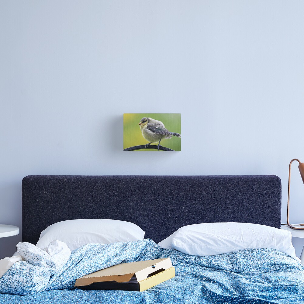 Young blue tit Canvas Print