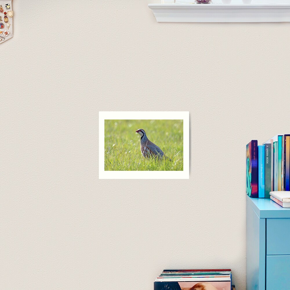 Red legged partridge Art Print