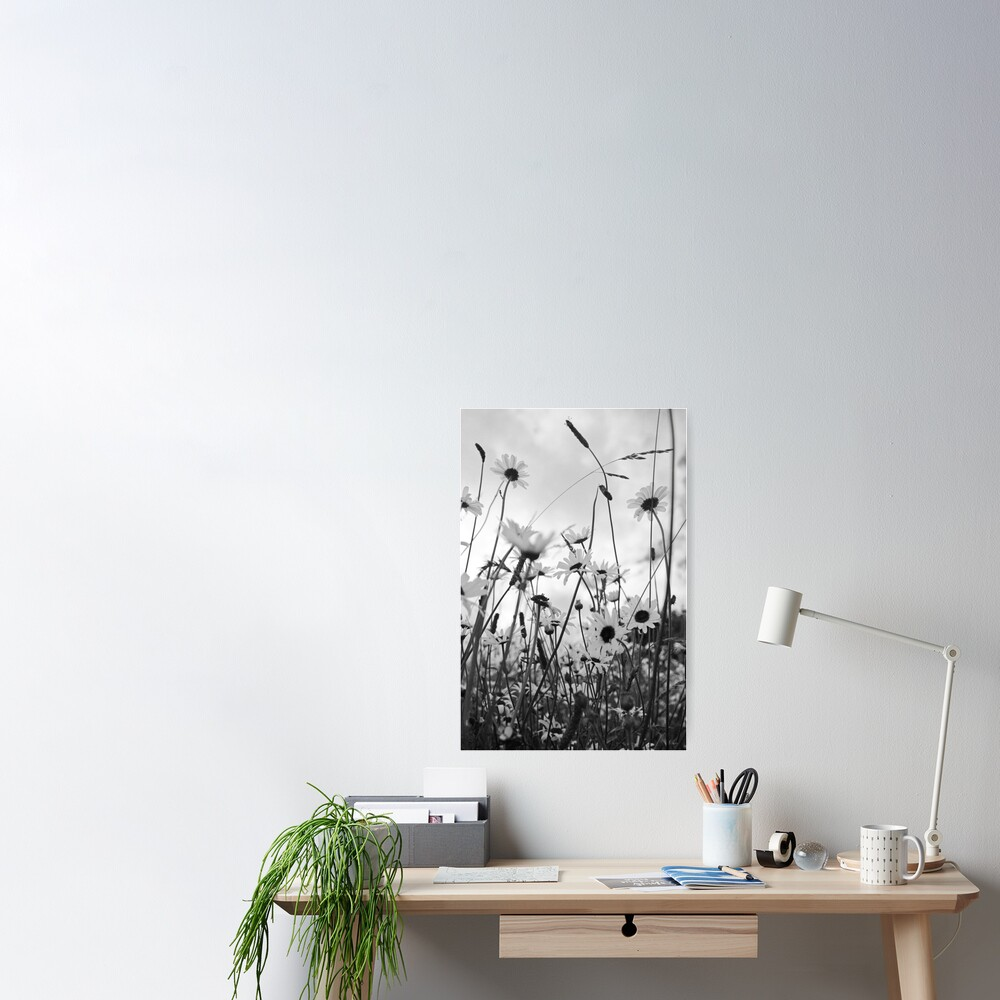 Oxeye daisies Poster