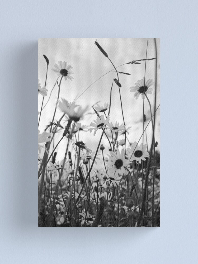 Alternate view of Oxeye daisies Canvas Print