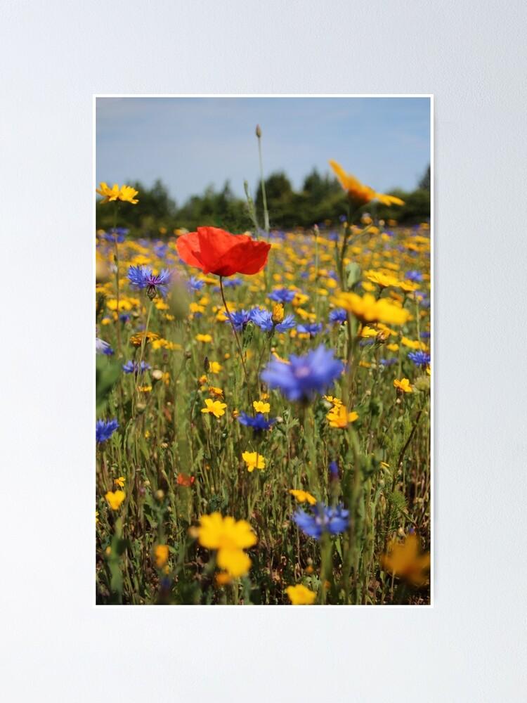 Alternate view of Wildflower meadow Poster
