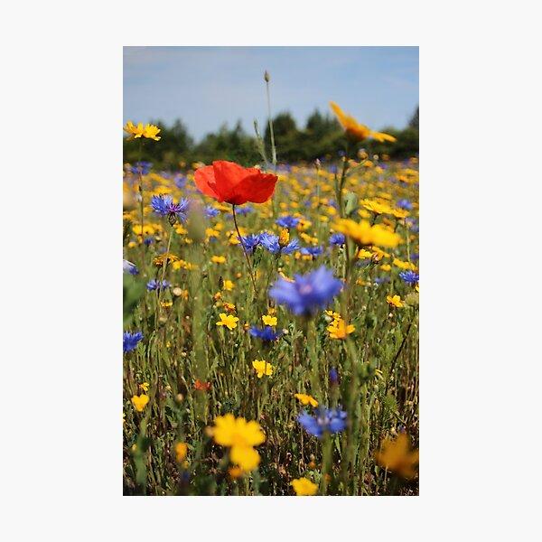 Wildflower meadow Photographic Print