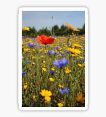 Wildflower meadow Sticker