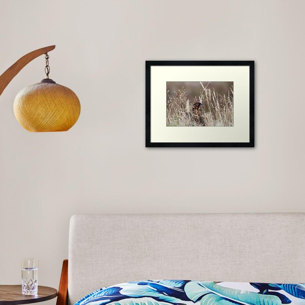 Grouse pose Framed Art Print