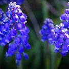 Random Purple Flowers by Jessica Hooper