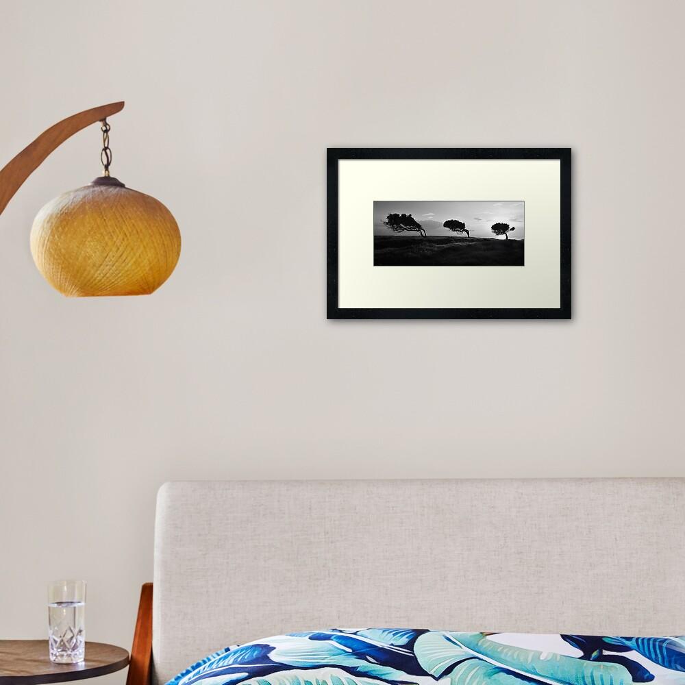 Twisted Trees - Norfolk Island Framed Art Print