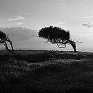 Twisted Trees - Norfolk Island by Greg Earl