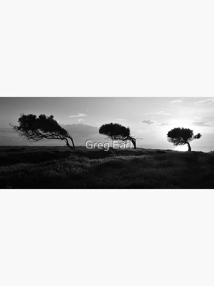 Twisted Trees - Norfolk Island by GregEarl