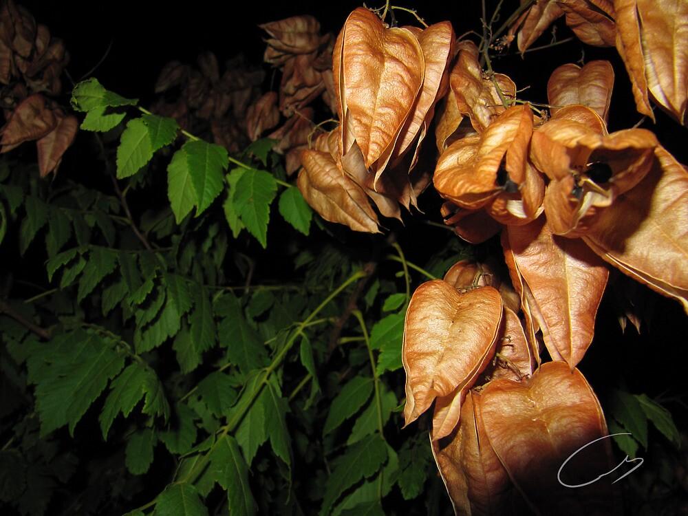 When Summer meets Autumn by eisencsm