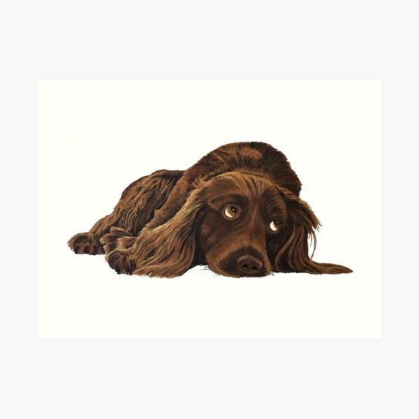 Appealing Spaniel - Wall Art Art Print