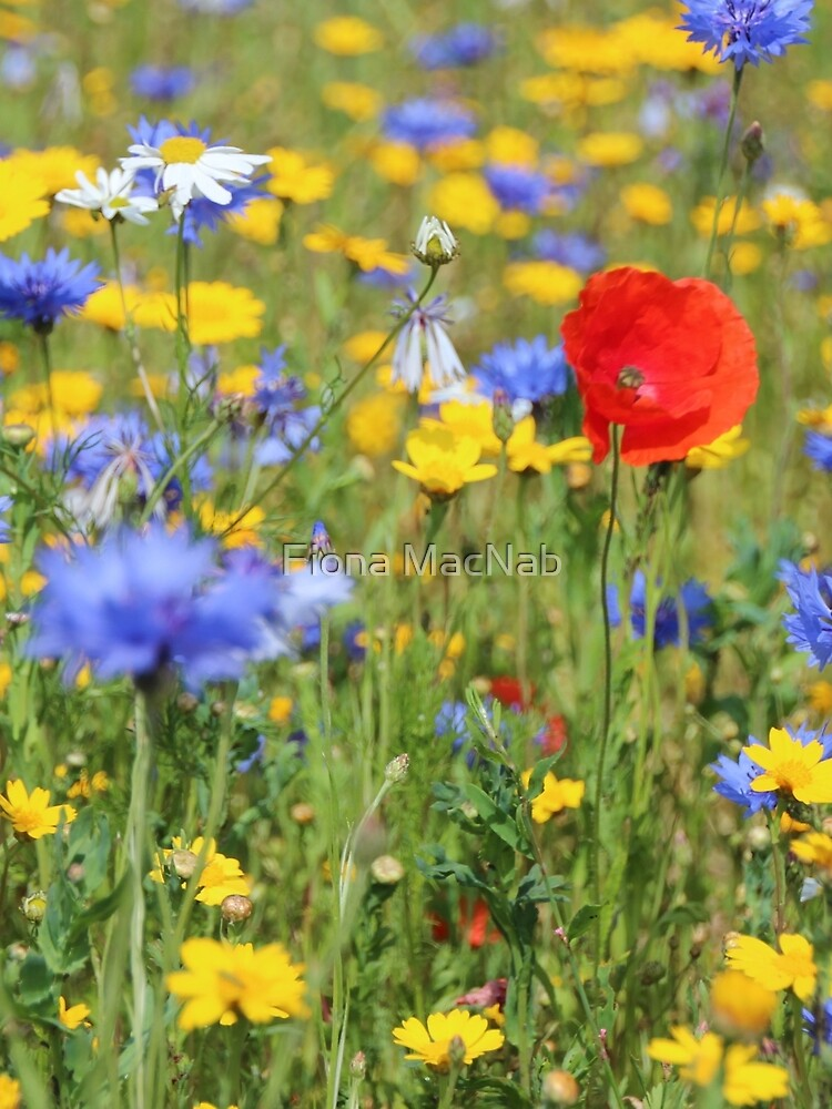 Wildflowers by orcadia