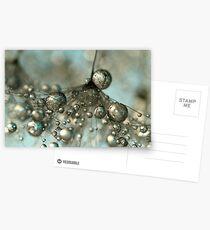 Dandy in Silver & Blue Postcards