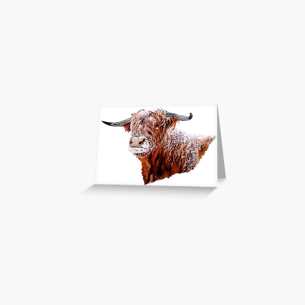 Snowy Highland Cow Greeting Card