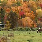 Fall Horse, Lake Ste-Marie, Quebec by Jim Cumming