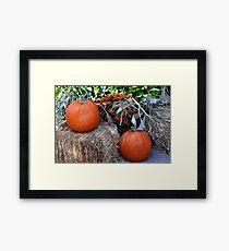 Harvest Pumpkins  Framed Print