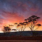 Sunset Storm - Randalls Gold Project - WA by Chris Paddick