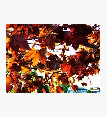 Fall Colors 2 Photographic Print