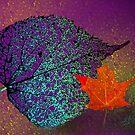 Jewel Tones of Autumn by Marija