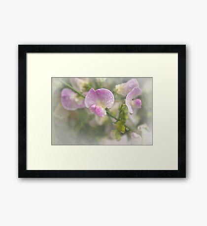 Refreshing beauty Framed Print