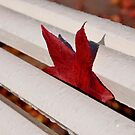 One red leaf inside a white bench by shkyo30