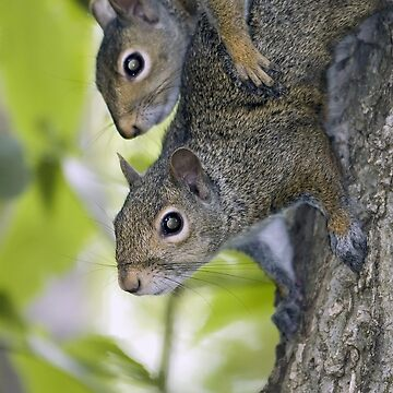 Sibling squirrels by mhackett