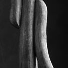 Study of form in Thonet Chair by MarkBigelow