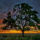 Tree Pano by Scott Sheehan