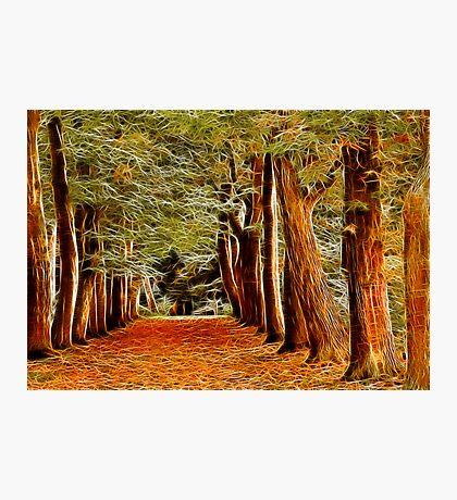 Fractalius Autumn Walkway Photographic Print