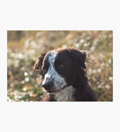 Bubbled dog Photographic Print