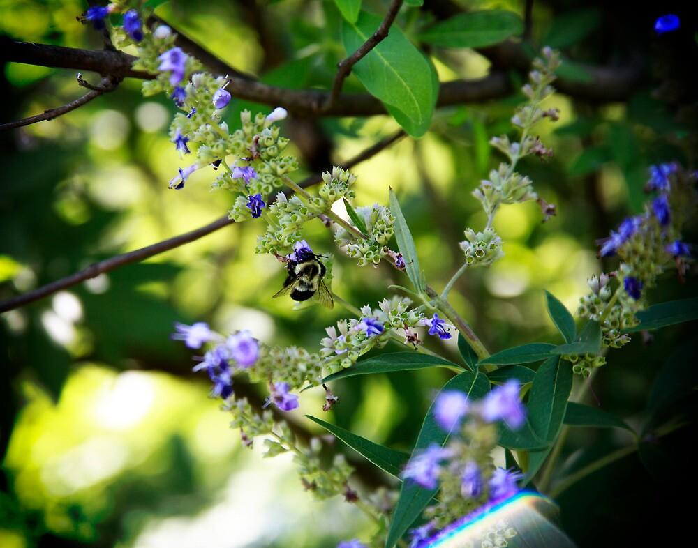 Purple Bee  by dawnderby