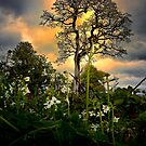 Keep Looking Up ~ White Oak Tree ~ by Charles & Patricia   Harkins ~ Picture Oregon