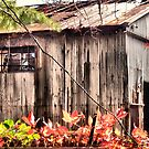 Tin Roof Rusted by Kevin Moore