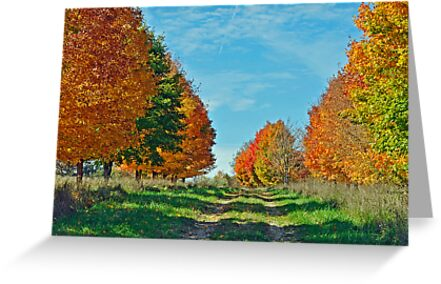 Maple Tree Lane by Rodney Campbell