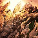 Autumn Sunset by Elisabeth Ansley