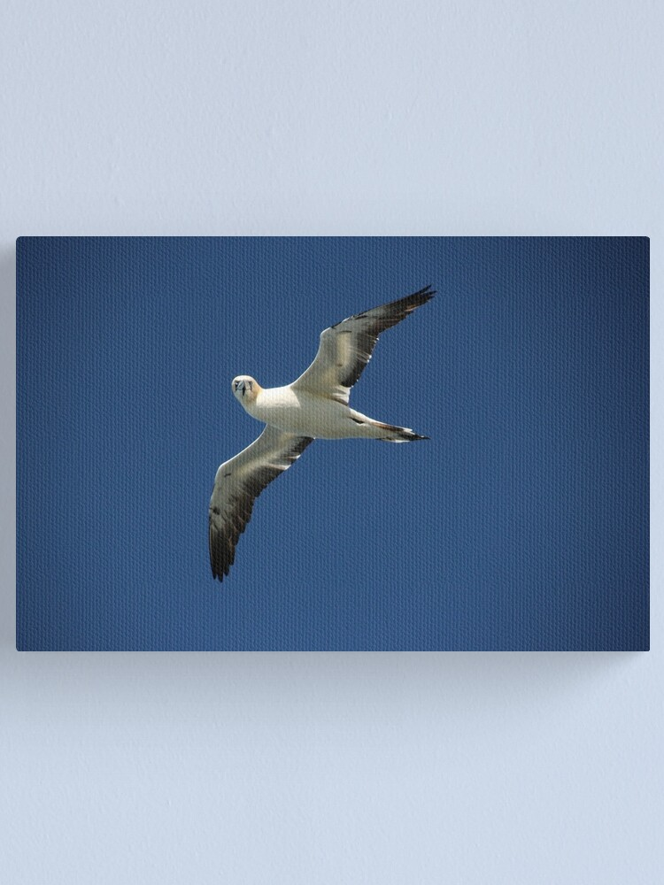 Alternate view of Flypast Canvas Print