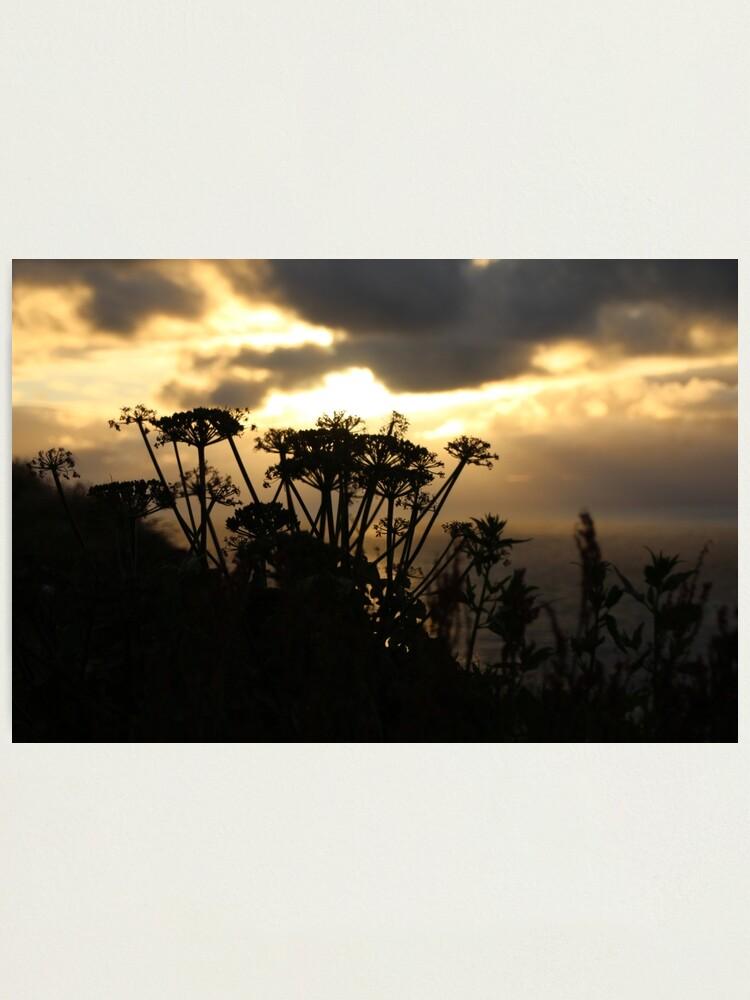 Alternate view of Sunset blossom Photographic Print