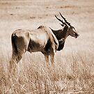 Spirit of South Africa by kkmeer