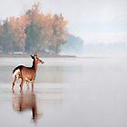 Young Buck - Ottawa River, Dunrobin Ontario by Debbie Pinard