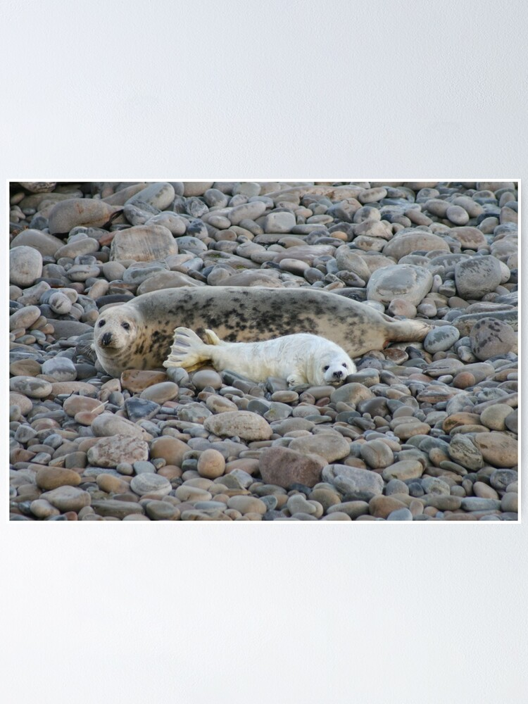 Alternate view of Grey seal & pup Poster